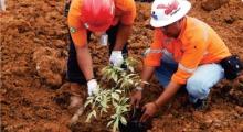 Jhonlin Group, PT. Dua Samudera Perkasa, Go Green, Hari Lingkungan, Kalimantan selatan, Tanah Bumbu, Batulicin, h isam